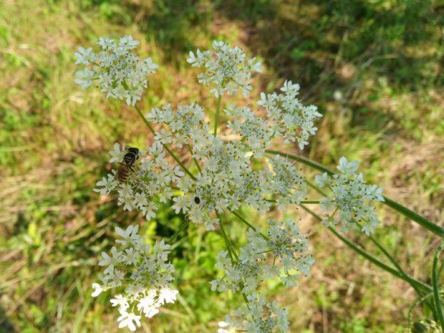 Insekten und Wiese